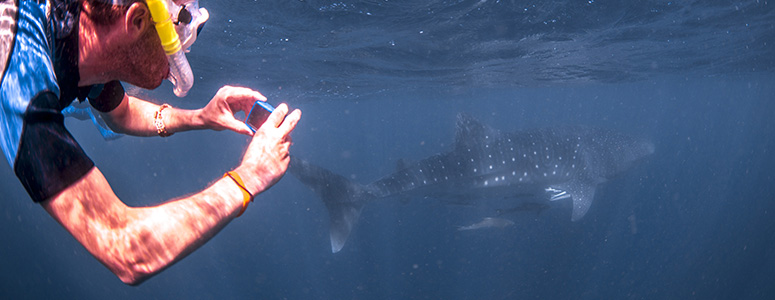 snorkelen walvishaai australie