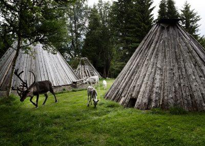 Sami Kamp,Jamtland