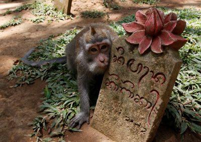 Aapje in de heilige Monkey Forest
