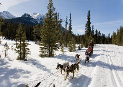 AdventureWintersport Canada.hondenslede