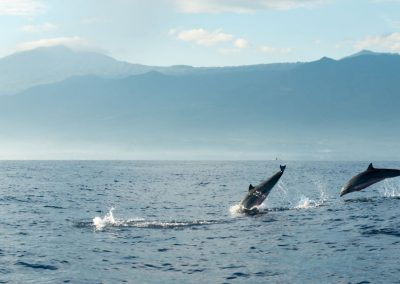 Dolfijnen voor de kust van Lovina