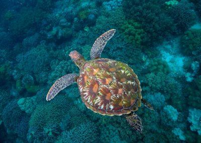 Voorkeur - Schildpad