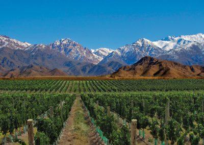 Wijnvelden in Mendoza
