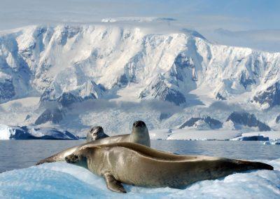 antartica2482