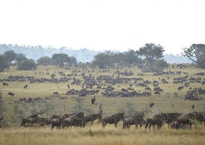 Ajubatus Safaris 14