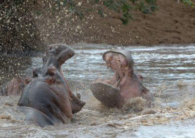 Ajubatus Safaris 16