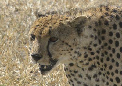 Ajubatus Safaris 19