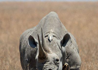 Ajubatus Safaris 23