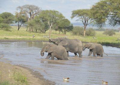 Ajubatus Safaris 3