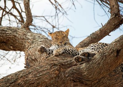 Ajubatus Safaris 7