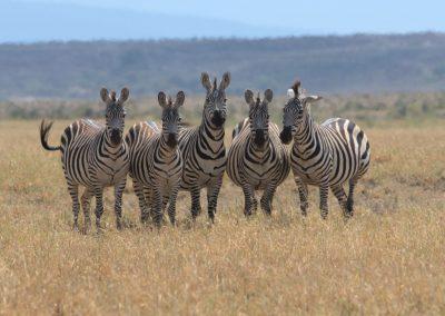 Ajubatus Safaris 8