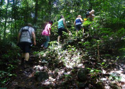 Tocht door de jungle naar de Voltzberg