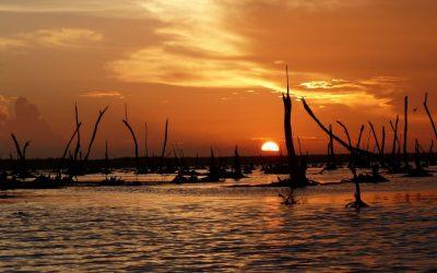 Ontdek het echte Suriname